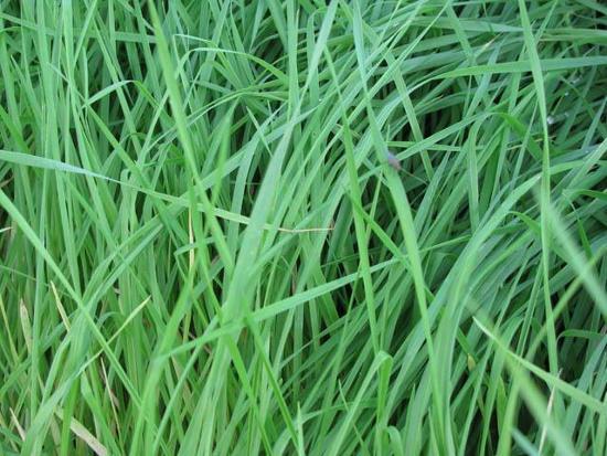 скачать траве через торрент - фото 7